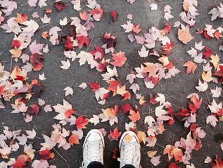 Quoi faire cet automne à Québec