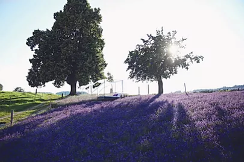 Pressebericht_Lavendel.bmp