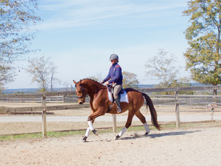 Top of your list dressage partner