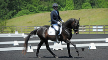 Easy to ride dressage superstar - Sold
