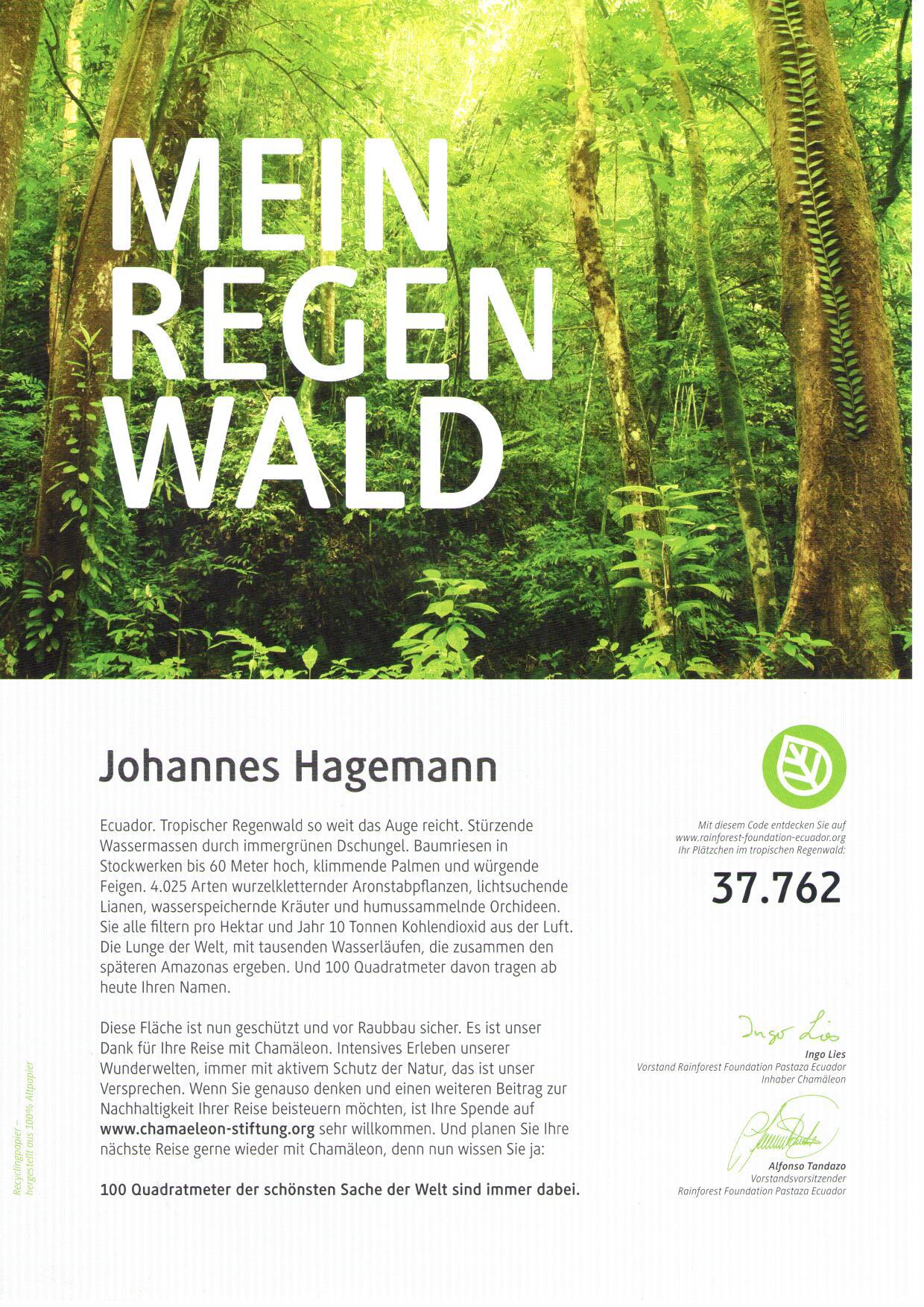 Regenwald Chamäleon