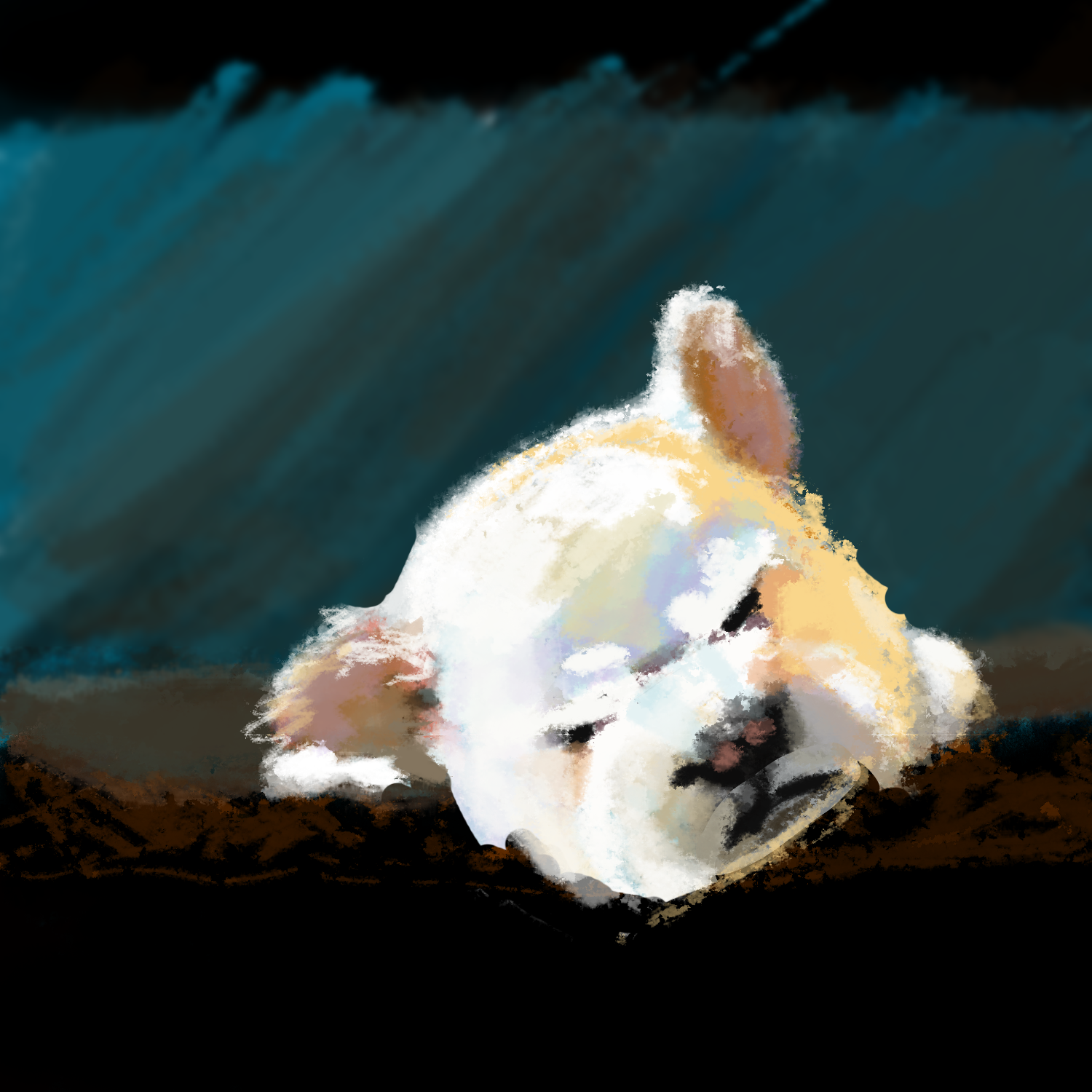 I saw this adorable dog online and did a quick paint study of it.