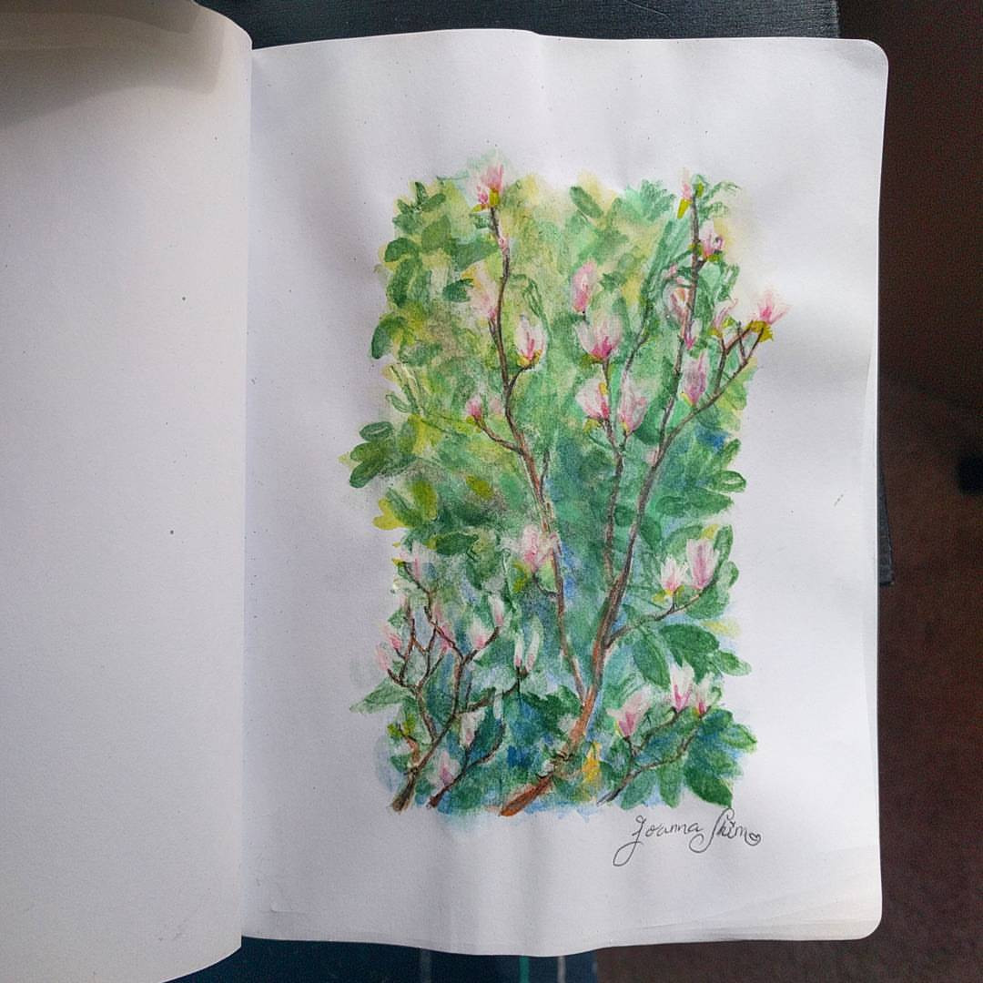 Watercolor pencil painting of these beautiful magnolias that used to grow outside my window.