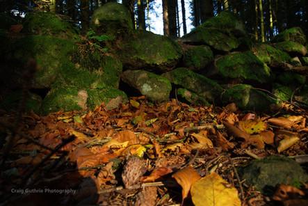 Beecraigs Autumn 1.jpg