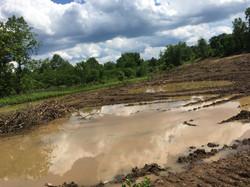 PA Wetland Remediation