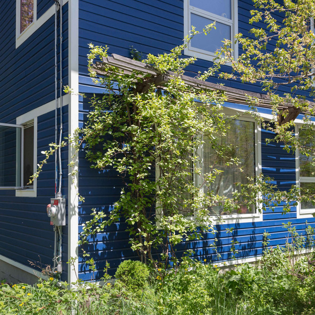 Sunshade trellis for climbing vines