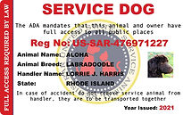 registered service dog owner