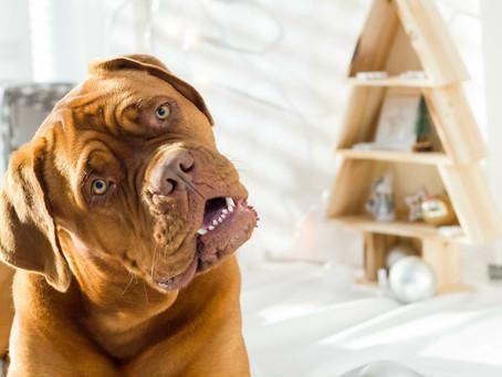 Dog Daycare with Dog Training