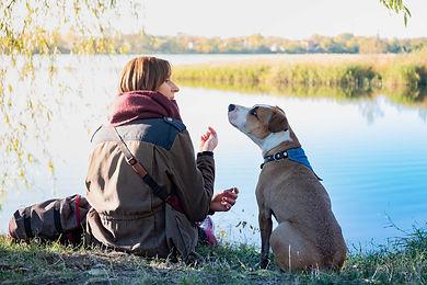 Dog Communications