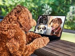 online emotional support dog training