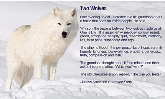 TWO WOLVES - WHO WINS ??