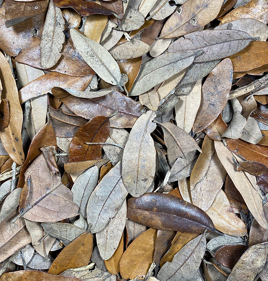 1 Gallon Live Oak Leaf Litter