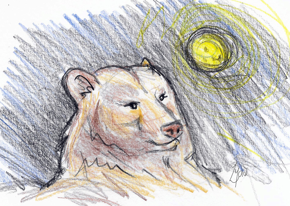A quick bear sketch by Lydia
