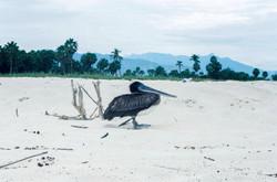 La Playita, Mexico