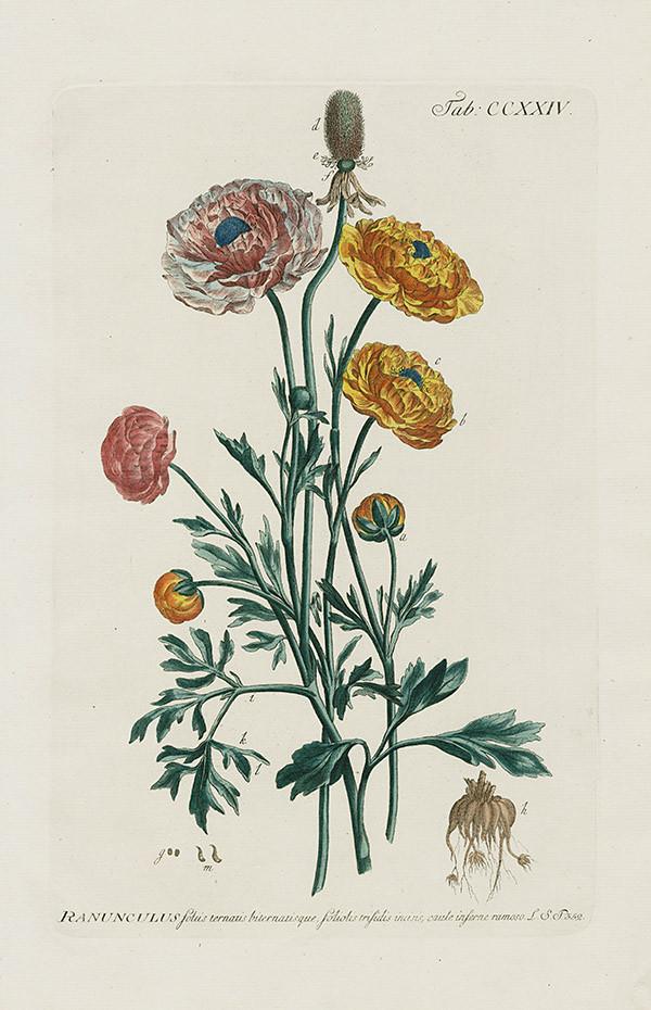 Libro de botanica de Phillip Miller