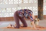 organisk yogakatt.jpg