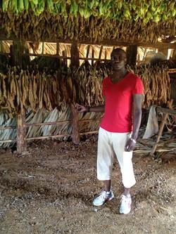 Куба табак (19)