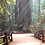 Thumbnail: Henry Cowell Redwoods State Park