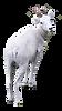goat%20cutout_edited.png