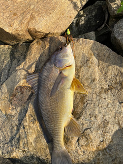 Dog Fish Catch