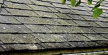 algae covered shingles.jpg
