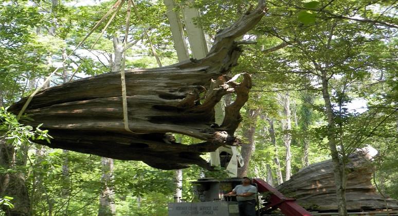 Big Stump 29.jpg