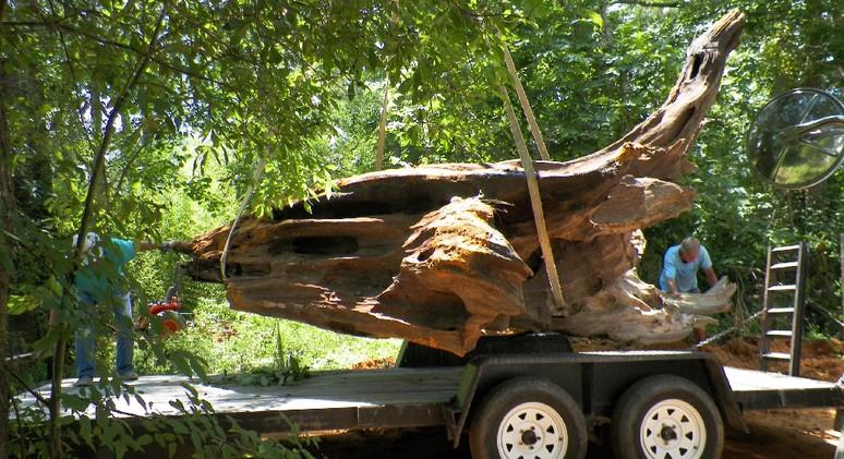 Big Stump 22.jpg