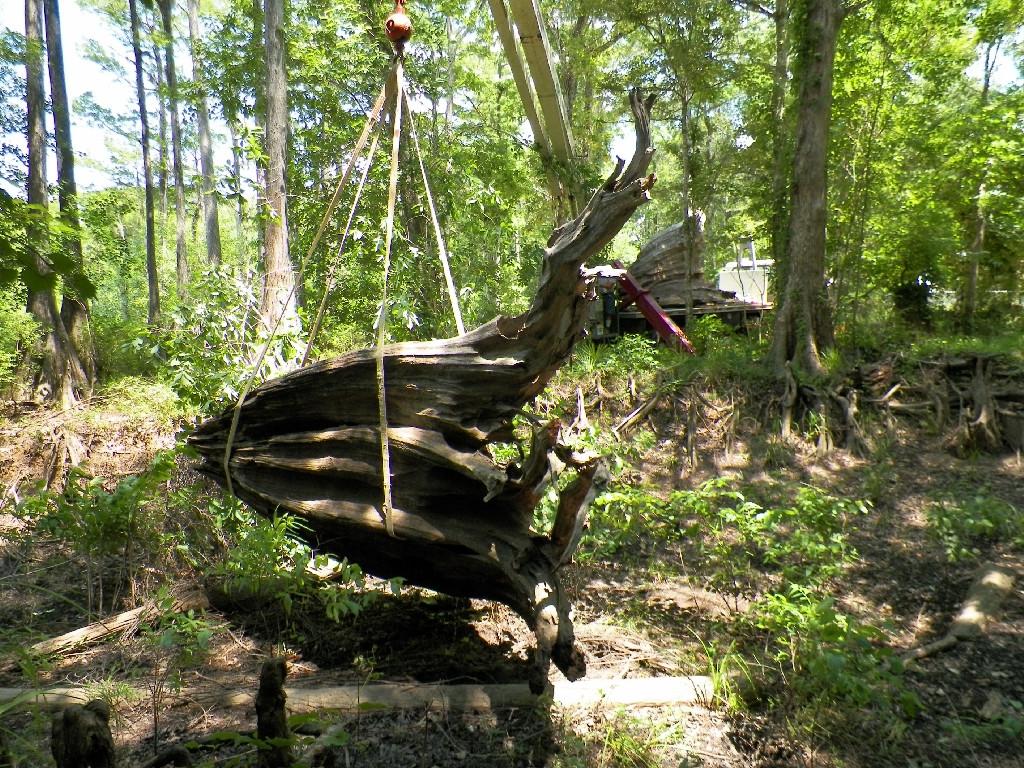 Big Stump 30.jpg