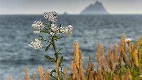 Irland: Hochprozentiges im County Kerry