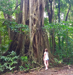 The magic far waway tree