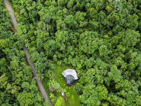 Isolation in the Daintree Rainforest