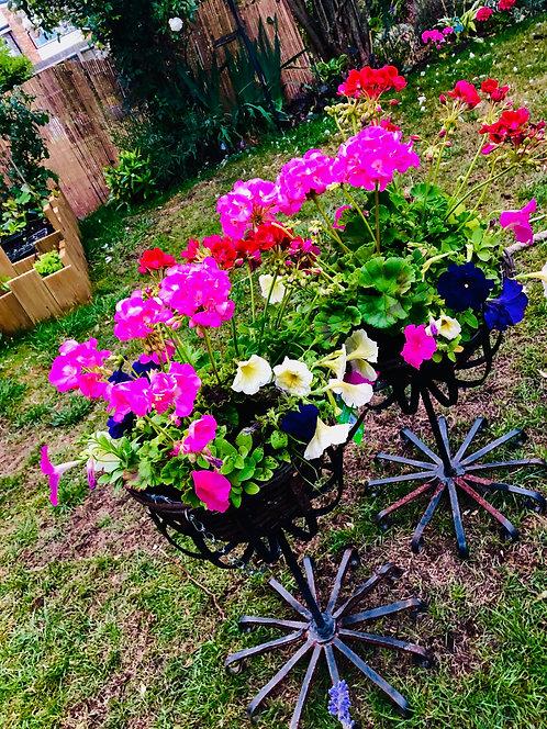 PRE ORDER Summer Planted Hanging Basket