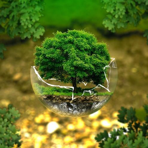 Combattere il cambiamento climato con i biocarburanti, è possibile?