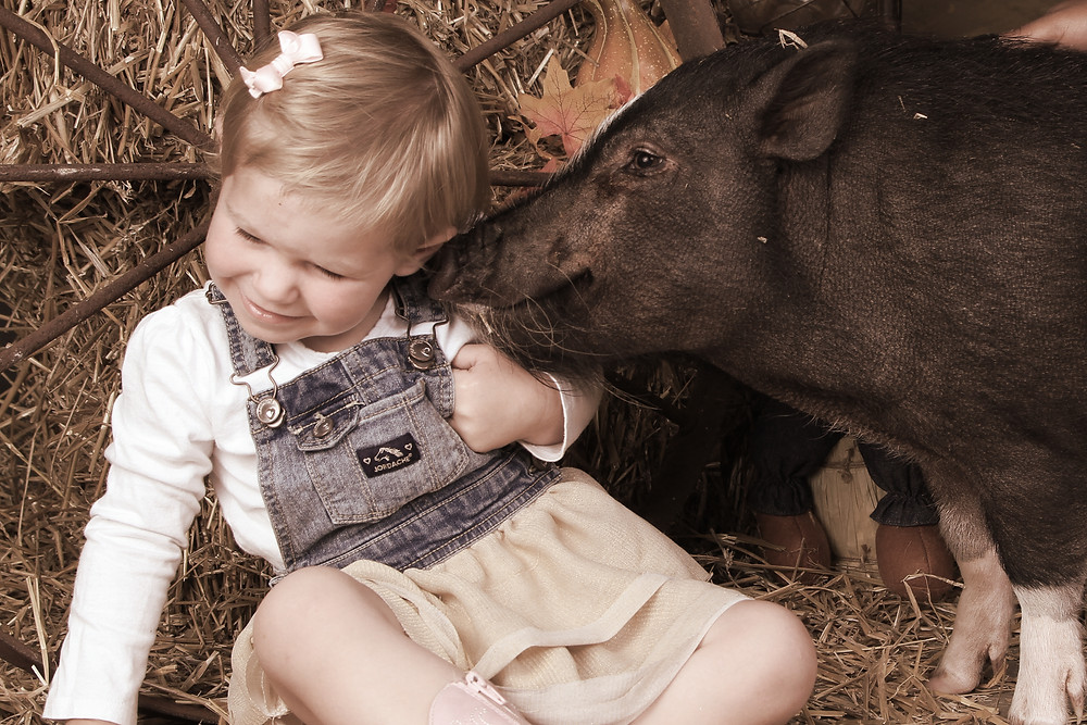 Little Girl with Pig