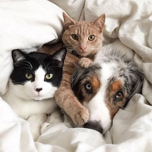 Litho accompagnement animaux