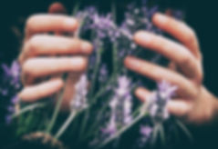 lavender in hands.jpg