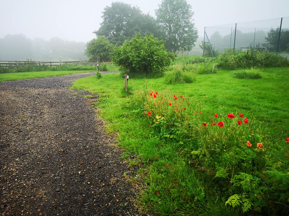 cabin poppies and fog