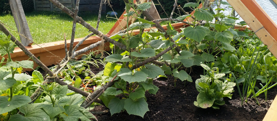 Cold frames, raised beds and garden magic