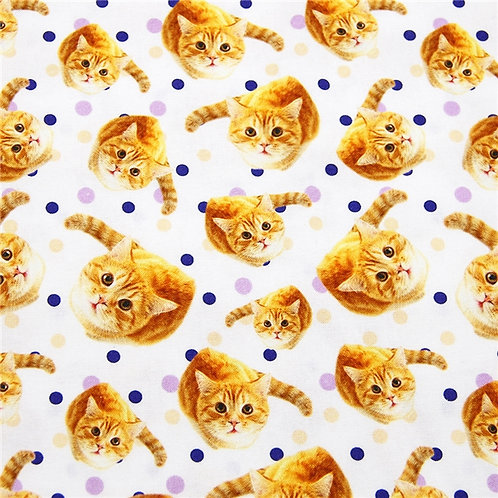 Cats - Cute Kittens Fabric