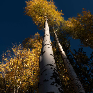 Aspen Sunset, San Francisco Peaks, AZ-2.