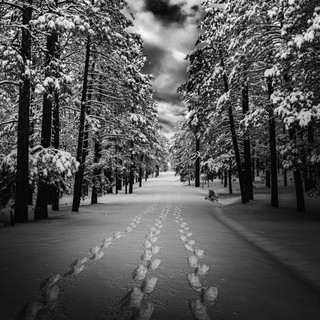 Pathways - Forest in Winter