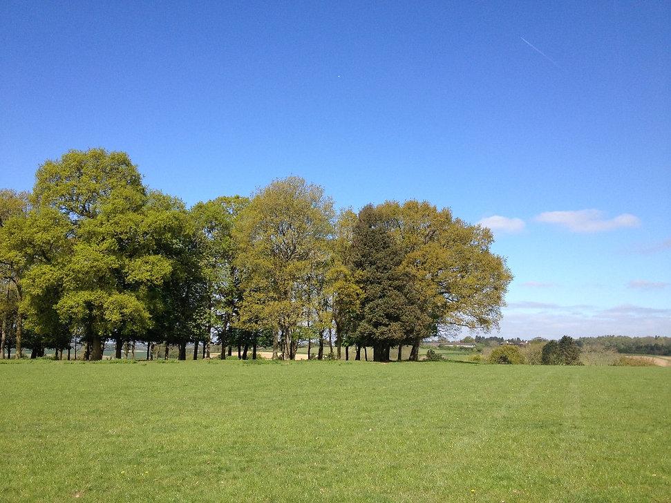fawley fields land.jpg