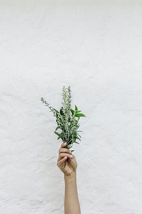 herbalistpic.jpg