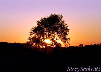 Sunset-tree01.jpg