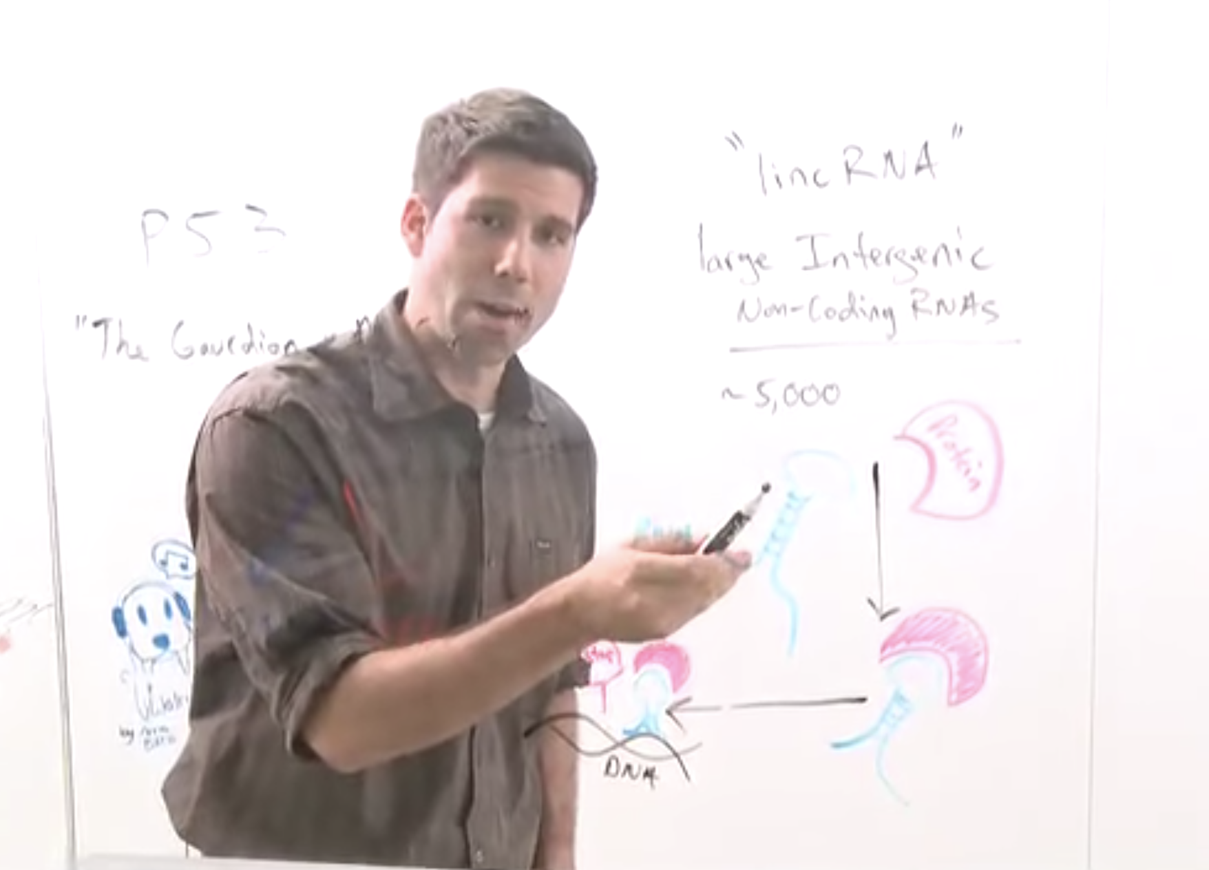 Image of John Rinn on whiteboard