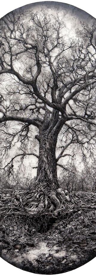 Laura's Tree