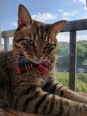 cat groomed pic.jpg