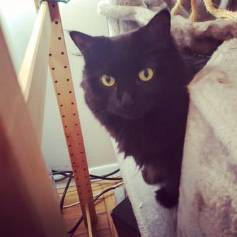 cat-sitting-curious