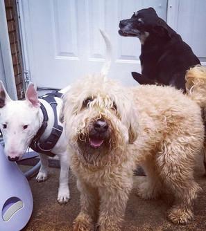 Pet Sitting Squad!