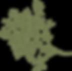 branch-309208_1280_modifié.png
